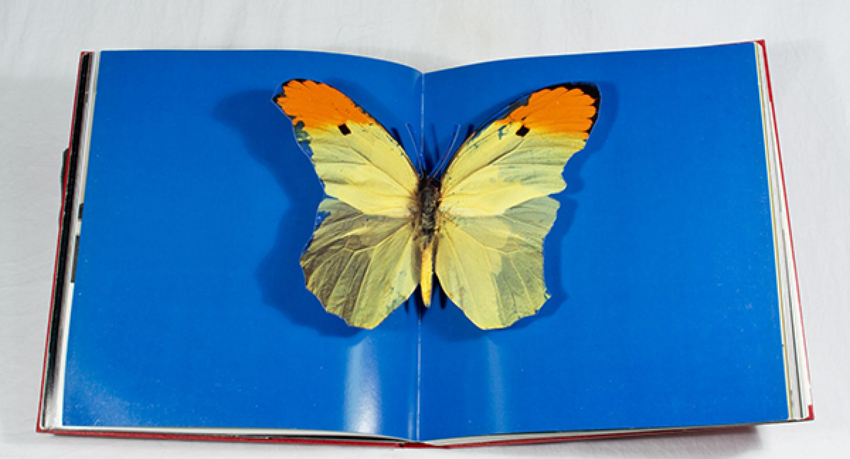 Artist's book from the Fine Arts Library